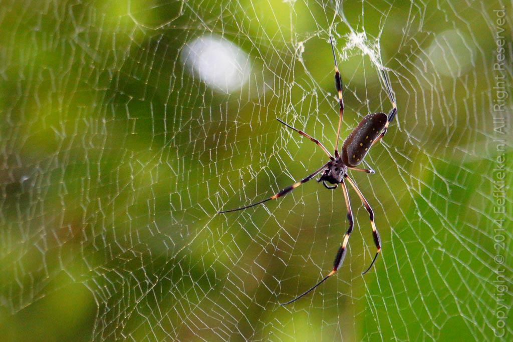 6.4 Spider