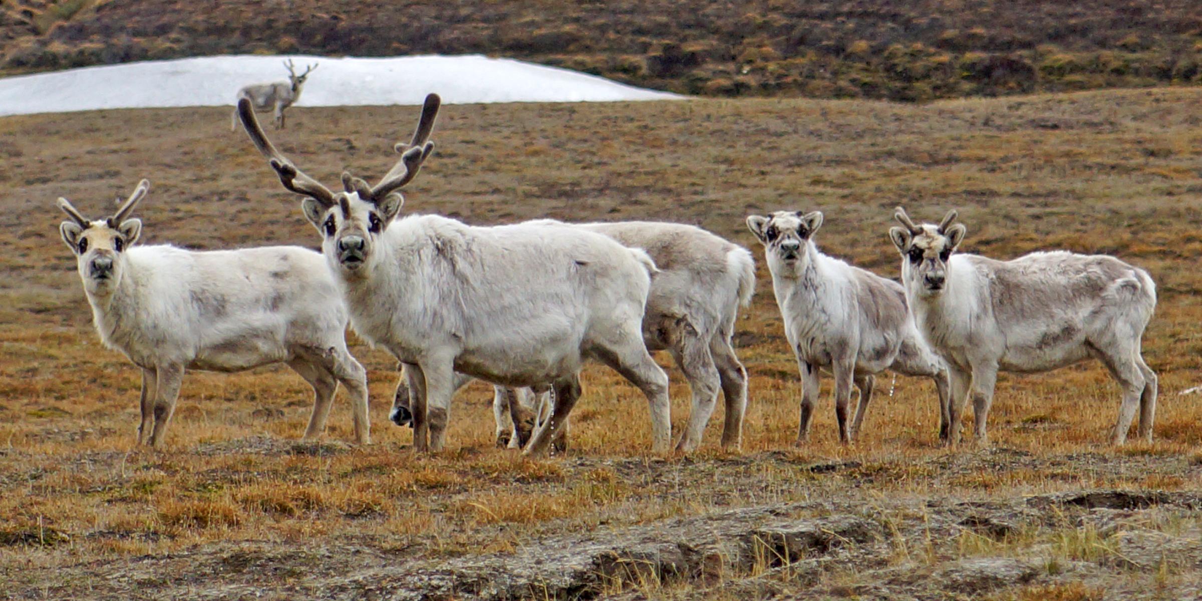 Spitsbergen verhaal 1 2400x1200