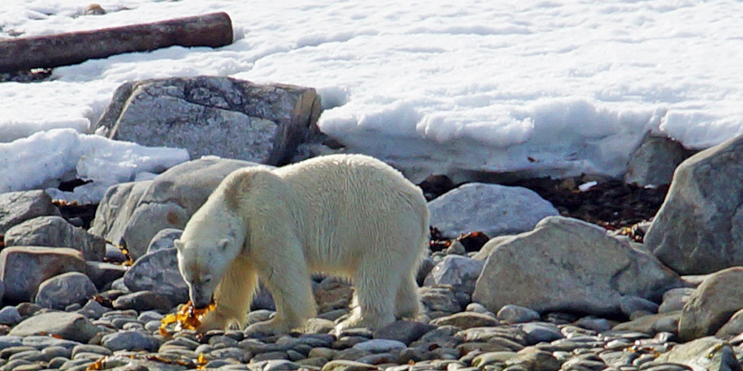 Spitsbergen verhaal 3 2400x1200