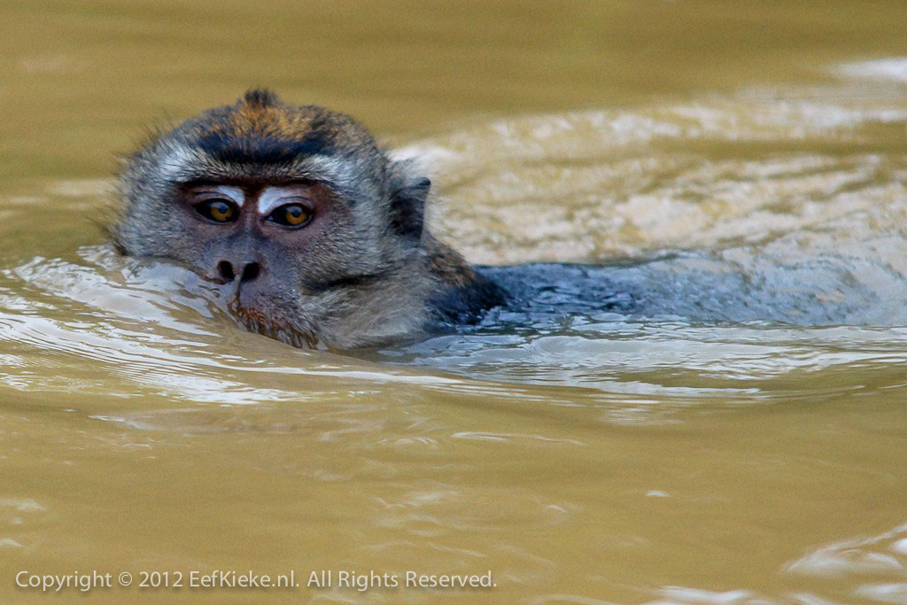 Stoer aapje