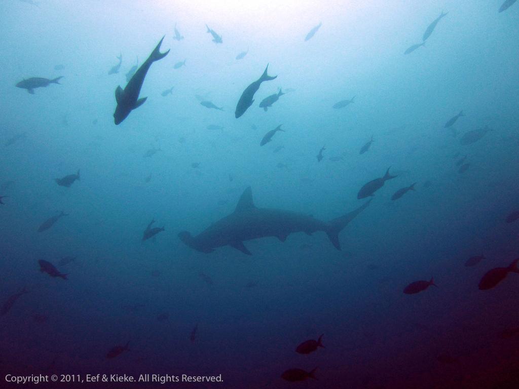 duiken - 02 bye haai